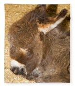Burro Foal Fleece Blanket