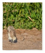 Burrowing Owl IIi Fleece Blanket