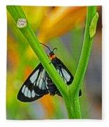 Butterfly An3597-13 Fleece Blanket