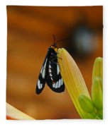 Butterfly An3606-13 Fleece Blanket