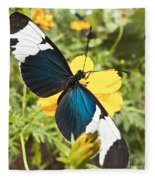 Butterfly Sara Longwing Fleece Blanket