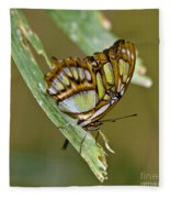 Butterfly Siproeta Stelenes Fleece Blanket