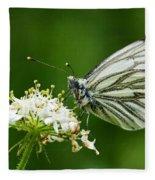 Cabbage Butterfly Fleece Blanket