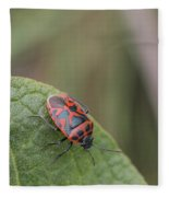 Cabbage Shield Bug Fleece Blanket
