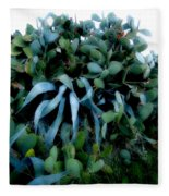 Cactus Family Almeria Region Spain 2013 January Fleece Blanket