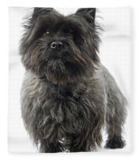 Cairn Terrier Dog Fleece Blanket