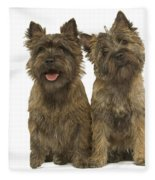 Cairn Terriers Fleece Blanket