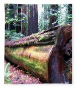 California Redwoods 2 Fleece Blanket