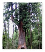 California Redwoods 6 Fleece Blanket