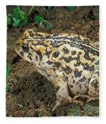 California Toad Bufo Boreas Halophilus Fleece Blanket