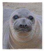 Cambria Baby Seal Fleece Blanket