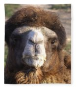 Camel Face Fleece Blanket