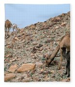 Camels At The Israel Desert -1 Fleece Blanket