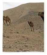 Camels At The Israel Desert -2 Fleece Blanket