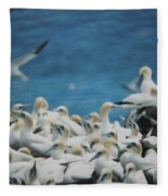 Cape St. Mary Ecological Resrve Fleece Blanket
