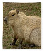 Capybara Fleece Blanket