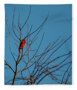 Cardinal Morning Fleece Blanket