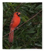 Cardinal Fleece Blanket