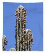 Cardon Cactus And Fruit  Fleece Blanket