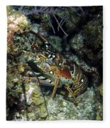 Caribbean Reef Lobster On Night Dive Fleece Blanket