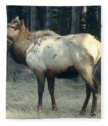 Elk Side Profile - Banff, Alberta Fleece Blanket