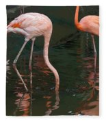 Cartoon - A Flamingo With Its Head Under Water In The Jurong Bird Park Fleece Blanket