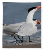 Caspian Tern Giving Fish To Mate Fleece Blanket