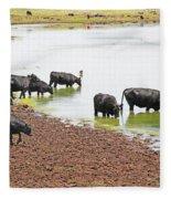 Cattle At Big Lake Arizona Fleece Blanket