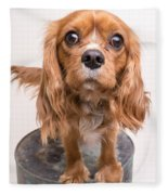 Cavalier King Charles Spaniel Puppy Fleece Blanket