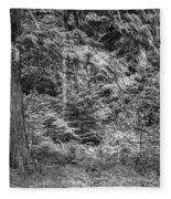 Cedar Along The Trail Of Cedars Glacier National Park Bw Fleece Blanket