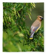Cedar Waxwing 3 Fleece Blanket