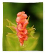 Celosia Fleece Blanket