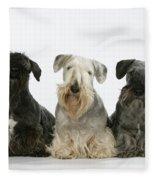 Cesky Terrier Dogs Fleece Blanket