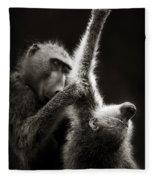 Chacma Baboons Grooming Fleece Blanket