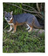 Channel Island Fox Fleece Blanket