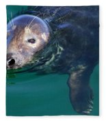 Chatham Harbor Seal Fleece Blanket