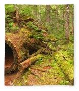 Cheakamus Old Growth Cedar Stumps Fleece Blanket