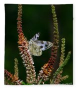 Checkered White On An Indigo Fleece Blanket