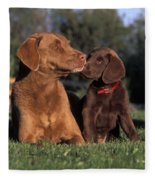 Chesapeake Bay Retrievers Fleece Blanket