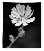 Chicory Wildflower Fleece Blanket