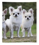 Chihuahua Dogs Fleece Blanket