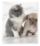 Chihuahua Puppy And British Shorthair Fleece Blanket