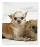 Chihuahua Puppy Dogs Fleece Blanket
