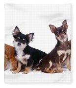 Chihuahuas Dogs Fleece Blanket