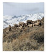 Chimney Rock Rams Fleece Blanket
