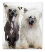 Chinese Crested Dogs Fleece Blanket