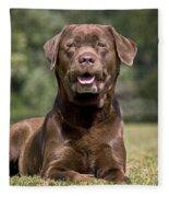 Chocolate Labrador Dog Fleece Blanket