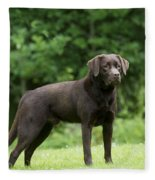 Chocolate Labrador Fleece Blanket