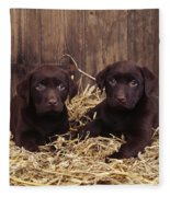 Chocolate Labrador Puppies Fleece Blanket