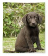 Chocolate Labrador Puppy Fleece Blanket